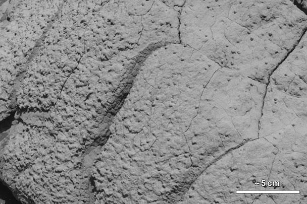 Когда-то в прошлом на Марсе были условия для образования форм жизни, заявили в NASA. К таким выводам ученых подтолкнул анализ данных марсианской породы, взятых марсоходом Curiosity. На этой фотографии запечатлена гора Wopmay в кратере Выносливости на Марсе