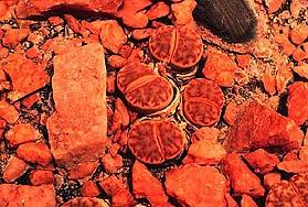 Признаки жизни на Марсе